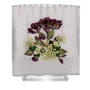 Oregano Florets And Leaves Pressed Flower Design Shower Curtain