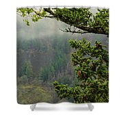 Oregon Fir Washington Forest Shower Curtain