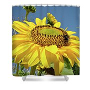 Oregon Gardens Silverton Sunflower Honeybee Baslee  Shower Curtain