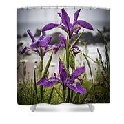 Oregon Iris At The Beach Shower Curtain