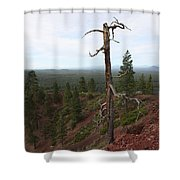 Oregon Landscape - Confused Tree At Lava Butte Shower Curtain