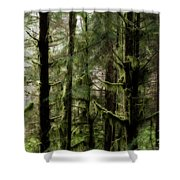 Oregon Old Growth Coastal Forest Shower Curtain