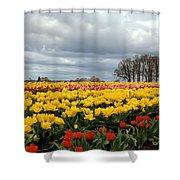 Oregon Tulip Fields 2 Photograph Shower Curtain