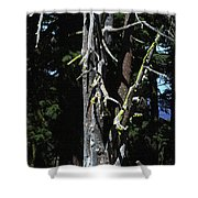 Oregon's Crater Lake Tree Shower Curtain