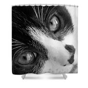 Oreo In Black And White Shower Curtain