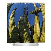 Organ Pipe Cactus Arizona Shower Curtain