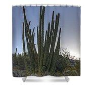Organ Pipe Cactus At Sunset Shower Curtain