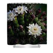 Organ Pipe Cactus Flowers  Shower Curtain