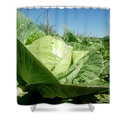 Organic White Cabbage  Shower Curtain
