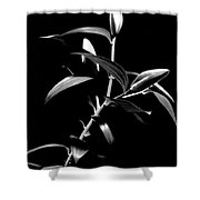 Oriental Lily Two Shower Curtain