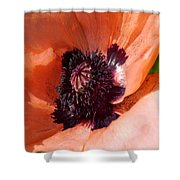 Oriental Poppy - Duvet Covers Shower Curtain