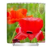 Oriental Poppy Flower Art Prints Poppies Red Baslee Troutman Shower Curtain
