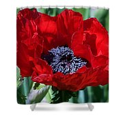 Oriental Red Photograph Shower Curtain