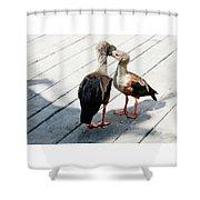Orinoco Geese Touching Heads On A Boardwalk Shower Curtain