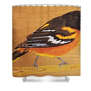 Oriole 3 Shower Curtain