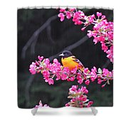 Oriole On Crabapple Shower Curtain