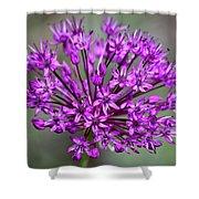Ornamental Allium Shower Curtain