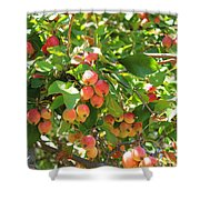 Ornamental Apples On A Tree Shower Curtain