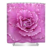 Ornamental Cabbage With Raindrops - Square Shower Curtain