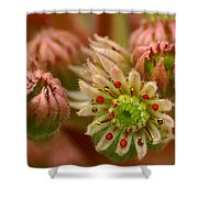 Ornamental Flower Shower Curtain