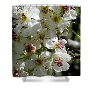 Ornamental Pear Shower Curtain