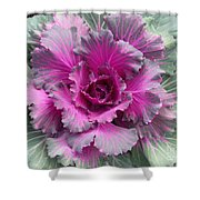 Ornamental Red Cabbage Shower Curtain