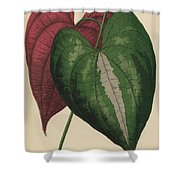 Ornamental Yam  Dioscorea Discolor Shower Curtain