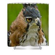 Ornate Hawk Eagle Shower Curtain