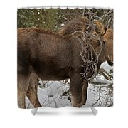 Orphan Shower Curtain