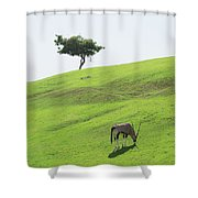 Oryx On Hill Shower Curtain
