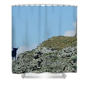 Osborne Bull 2 Shower Curtain