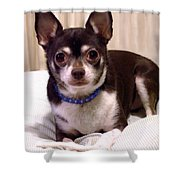Oscar The Chihuahua Shower Curtain