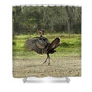 Osceola Turkey Trot Shower Curtain