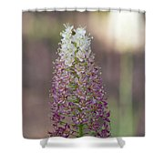 Osceola's Plume #2 Shower Curtain