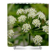 Osha Flowers 1 Shower Curtain