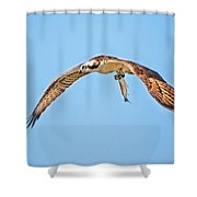 Ospre Carrying Lunch Shower Curtain