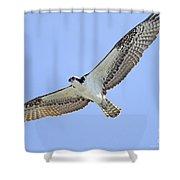 Osprey 1-30-11 Shower Curtain