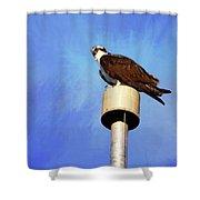 Osprey 1 Shower Curtain