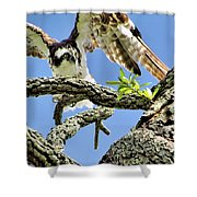 Osprey 4 Shower Curtain