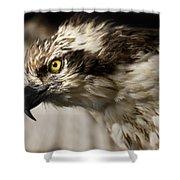 Osprey Shower Curtain by Adam Romanowicz