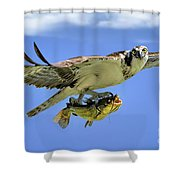 Osprey And Catfish Shower Curtain