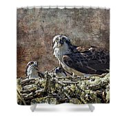 Osprey And Young - Feeding Shower Curtain