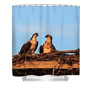 Osprey At Home Shower Curtain