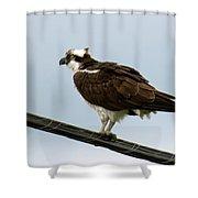 Osprey Shower Curtain