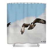 Osprey Botherd By Grackle Shower Curtain