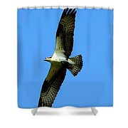 Osprey Carrying A Fish Shower Curtain