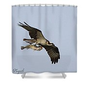 Osprey Catches A Fish Shower Curtain