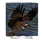 Osprey Catching A Fish Shower Curtain