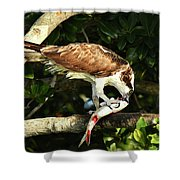 Osprey Dining Shower Curtain