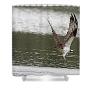 Osprey Dive Shower Curtain